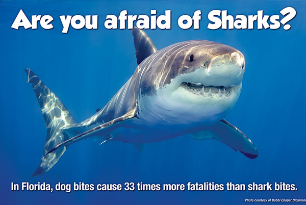 Shark Conservation photo