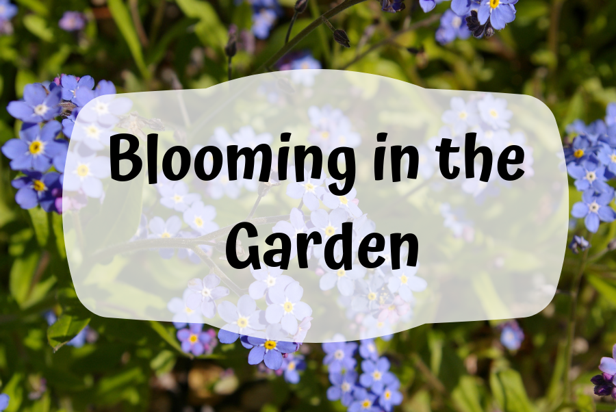 Blooming in the Garden flyer
