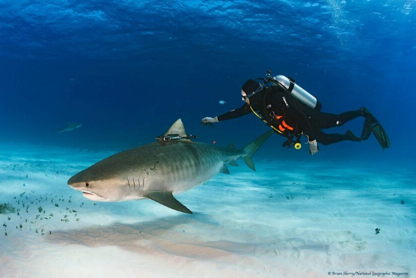 diver with shark photo